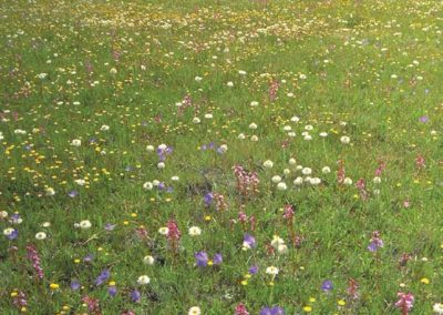 Temperate native grassland